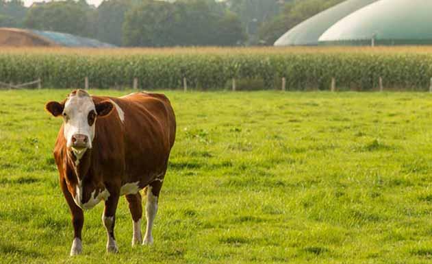 biogas_viterbo_impianti_realizzazione